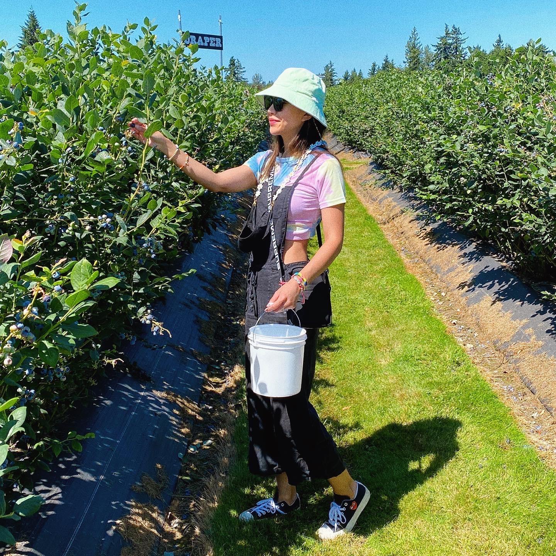 blueberry picking Seattle Enumclaw Washington