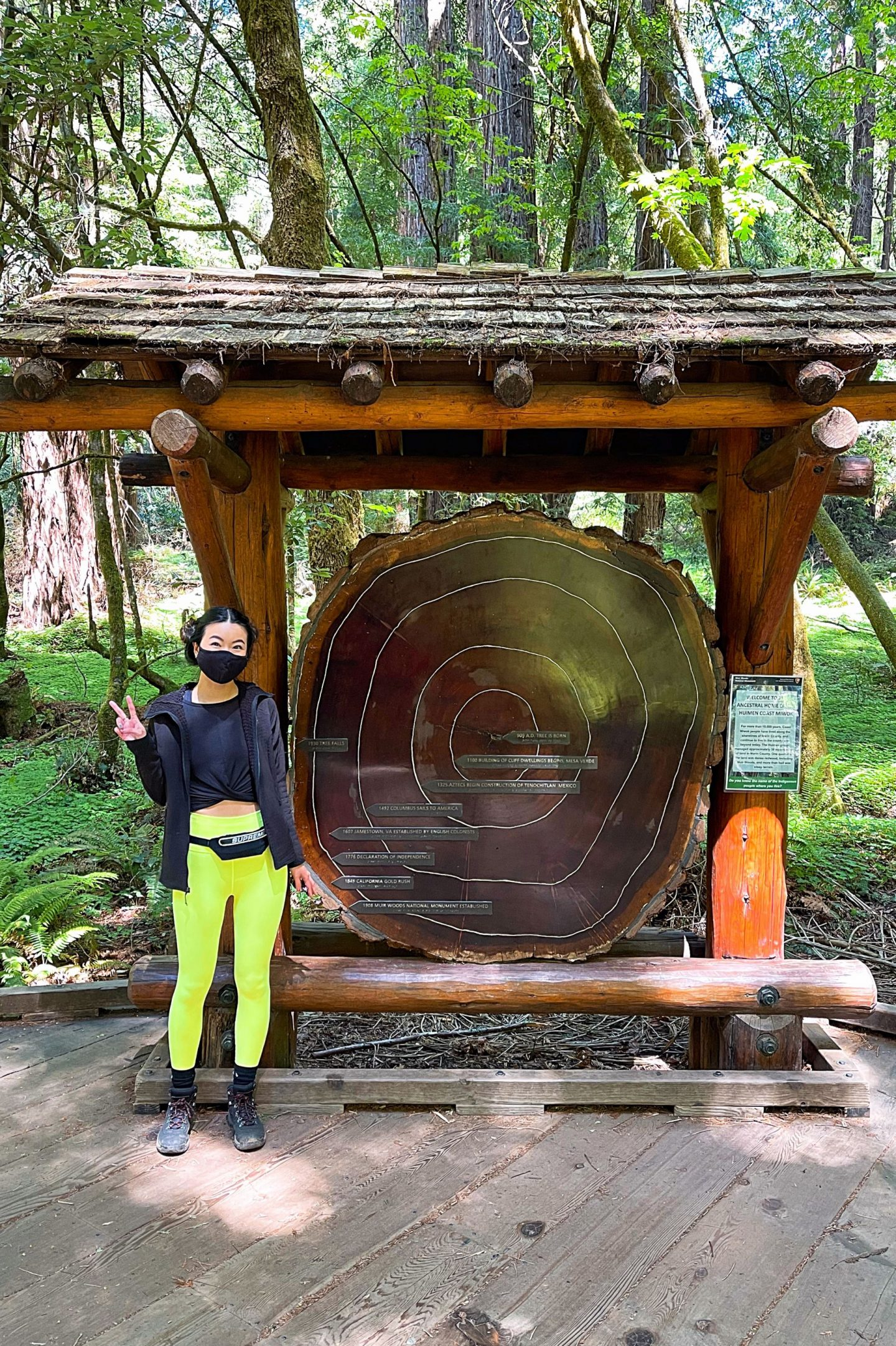 Muir Woods giant Redwood tree